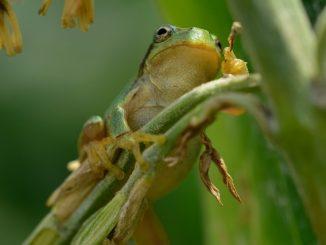 カエルの餌は成長過程で変わる?それぞれの時期に適した餌やりをまとめてみた!