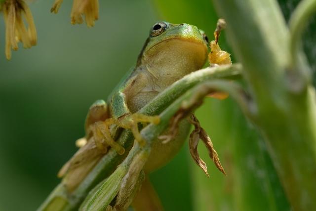 成体のカエルの餌は基本的に生きている虫?