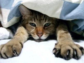 しつけが悪いの?ペットの猫が威嚇してくる原因と対応方法をご紹介!