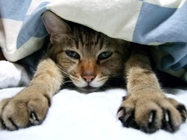猫の威嚇の原因③:怪我や病気など、身体が弱っているとき