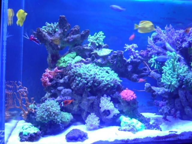 1回の餌やりで与える飼料の量は熱帯魚たちが数分で食べきれる分だけ