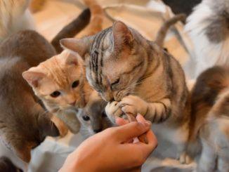 猫におやつをあげる頻度や量はどれくらい?どんなタイミングであげるべき?
