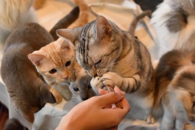 猫に与えるおやつの頻度が多くなっていない?
