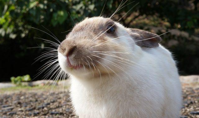うさぎにあげる餌の量や回数はどれくらいが適切?正しいエサのあげ方を学ぼう!