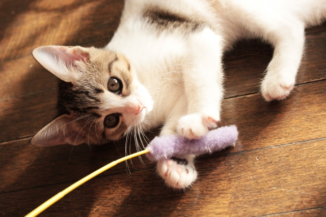 猫におもちゃを買ったのに遊ばない!なんで?