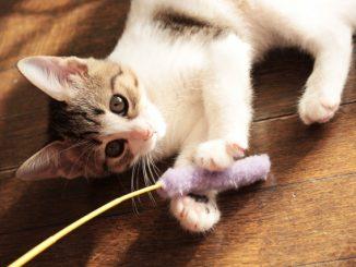 猫がおもちゃを隠すのはなぜ?どんな場所に隠す傾向がある?