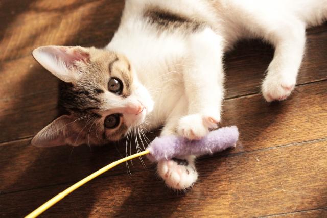 猫がおもちゃを隠すのはどこ?
