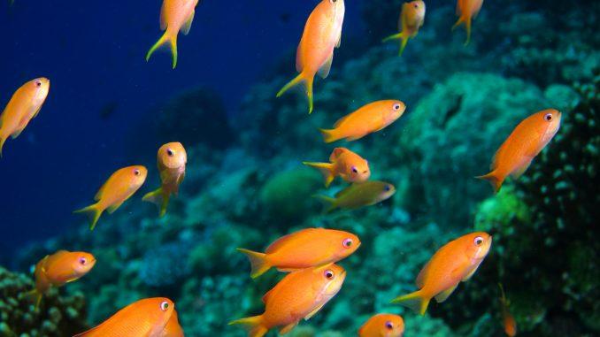 旅行に行く前に必見!熱帯魚は餌をどれくらい与えなくても大丈夫?