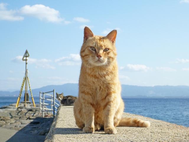 猫の威嚇とは?どんな威嚇するの?