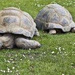 【タイプ別】誰でも出来る簡単な亀の飼育方法をお伝えします!