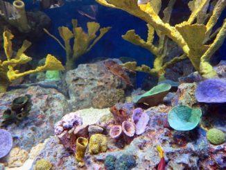 【水換えは毎日行うべき?】熱帯魚飼育における水槽の水質管理方法まとめ!