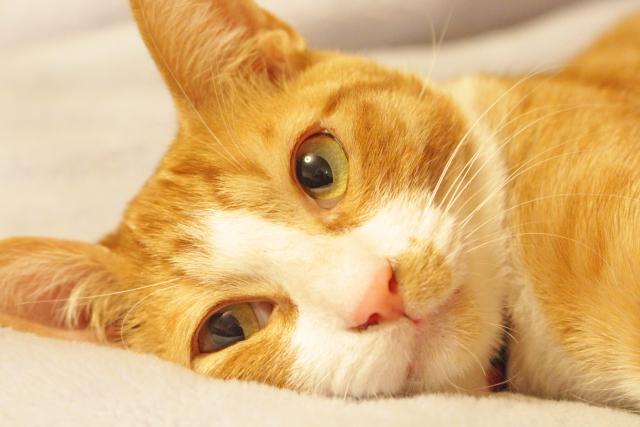 猫がおもちゃで遊ばない理由③:体調が悪い?もしかして病気かも。