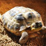 【初心者必見!】飼育のしやすい亀の種類はどれかを徹底検証!
