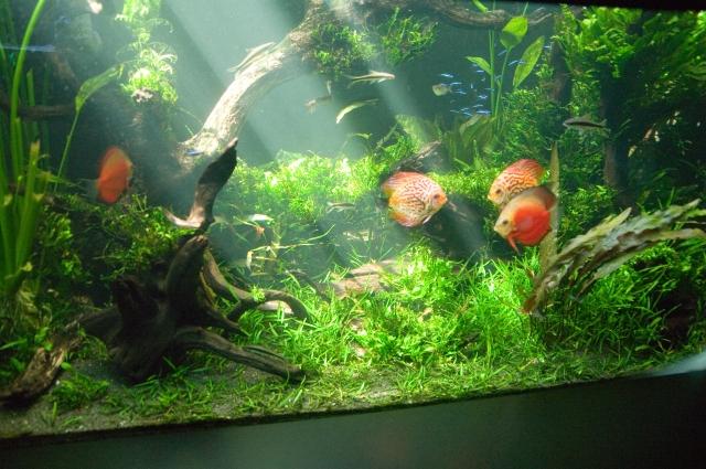 熱帯魚を飼育する際にコストがかかるものをまとめてみた