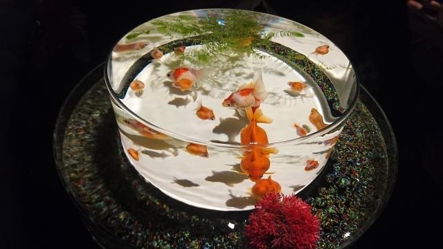 冬における金魚への餌やりは飼育方法によって異なる
