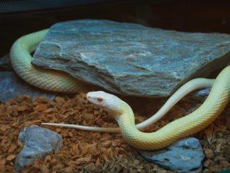 爬虫類の中でも人になつくペットにおすすめの種類はコレだ!