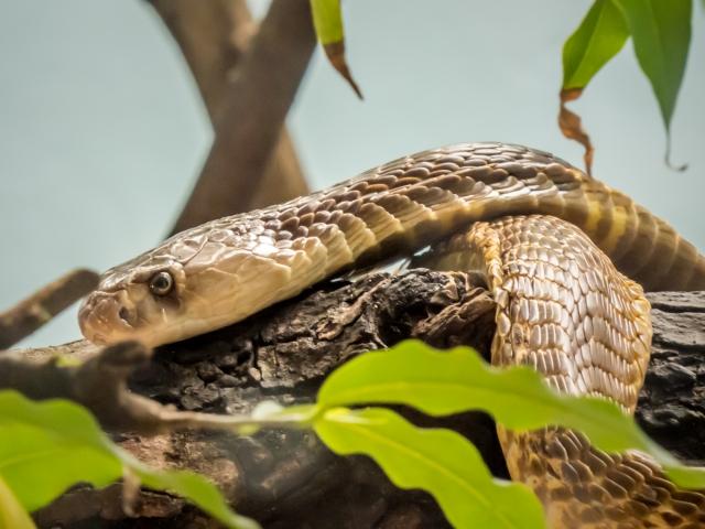 ヘビは無臭なので、臭いがダメな方におすすめです