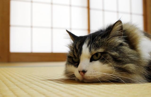 猫のおならが臭い、多い原因②:病気になっている