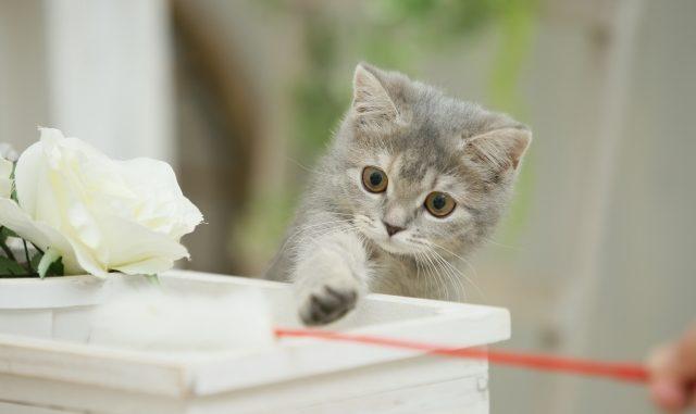 猫がおもちゃで遊ばない!?その原因とおすすめの対策方法!
