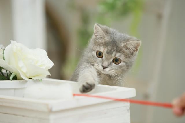 猫がおもちゃで遊ばない理由①:怖がっている!
