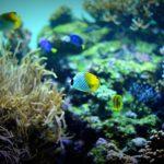 【緊急事態!】熱帯魚が餌を食べないときの原因と対応方法!