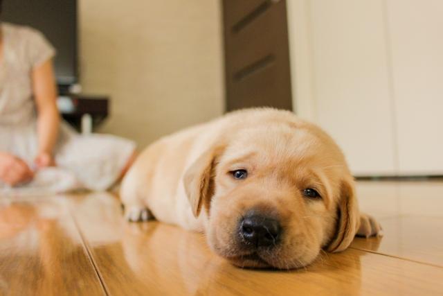 犬の甘える行動⑥:一緒に寝たがる!