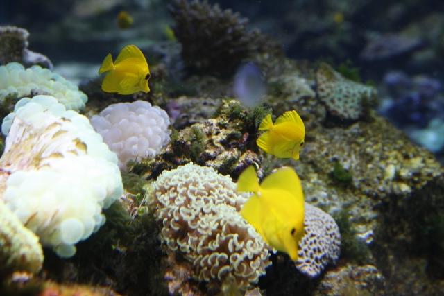 買って来たばかりの熱帯魚にはストレスがたまっているので要注意!