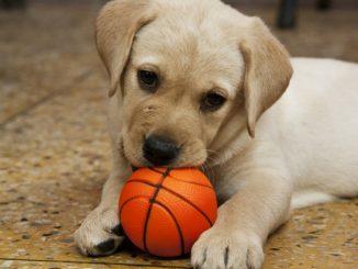 子犬の甘噛みを止めさせるしつけはいつからすべき?しつけの方法は?