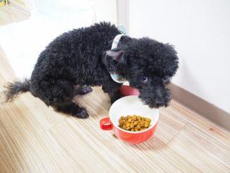 ペットの犬が元気なのに餌を食べない!?その意外な理由と適切な対応方法!