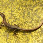 ペットして人気の爬虫類の種類別おすすめランキングを大公開!