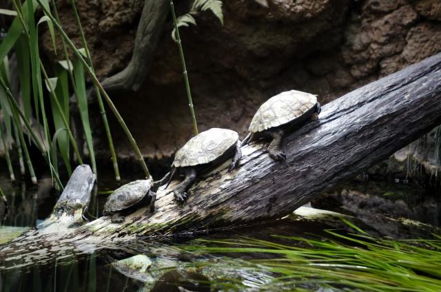 水棲亀の飼育方法もコツは水温・水質管理にある!