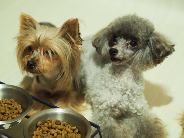 今注目されている犬の餌とその餌代とは?
