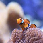 初心者におすすめ!飼育しやすい熱帯魚の種類から水槽選びまで!
