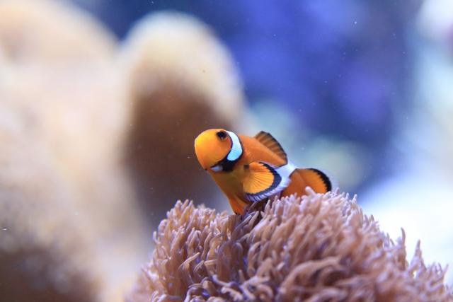 初心者でも出来るおすすめの熱帯魚飼育・メンテナンス方法を伝授