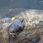 【必見!】亀を屋外飼育するための方法を種類別に徹底解説!