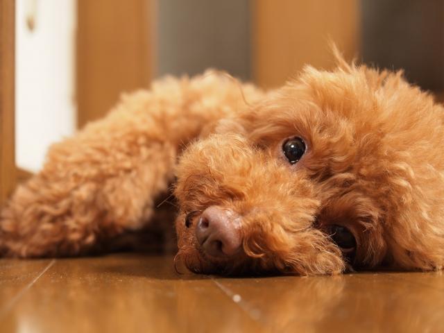 最近愛犬のあくびが多いな。これってもしかして病気のサイン?