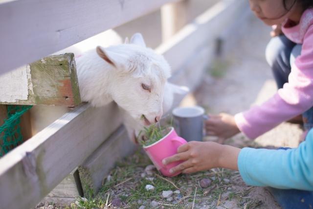 ヤギの餌ってどうすればいいの?
