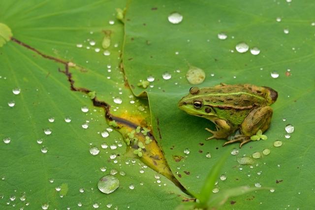 カエルの餌となる主な虫や生物は5パターン存在する