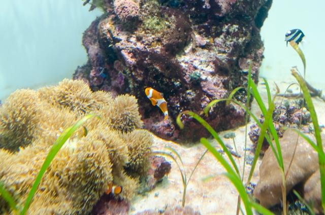 熱帯魚が餌を食べない時に確認するポイントはこれだ!