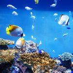 熱帯魚を水槽で飼育する際の維持費はどれくらい?節約方法を大公開!