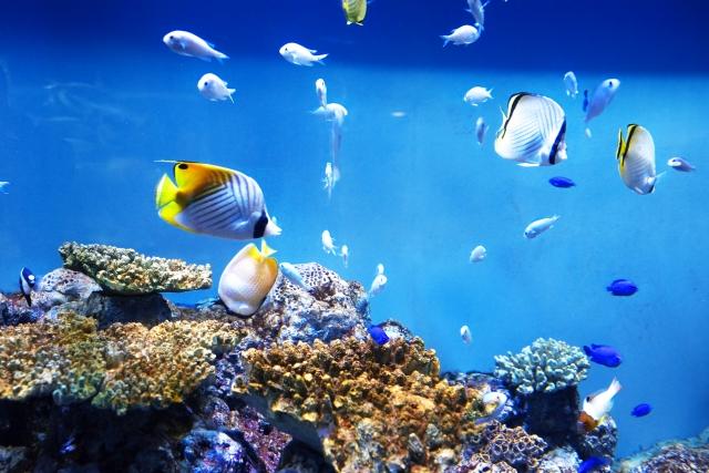 熱帯魚を飼育する維持費を下げる方法