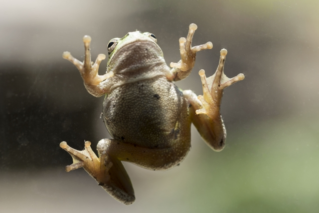 水槽でカエルを飼う場合に必要なものはこの4つ!