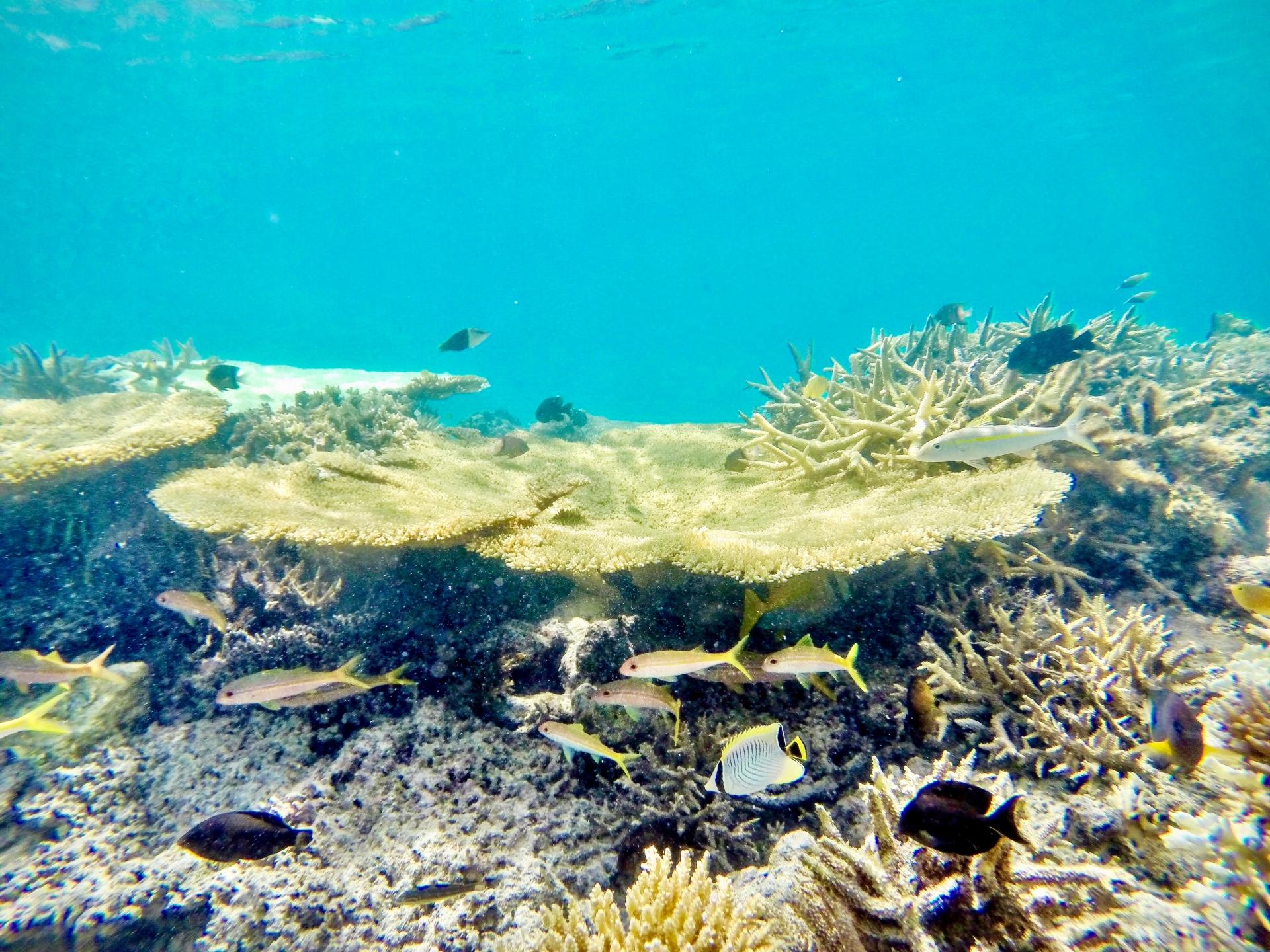 どうしても旅行期間中に熱帯魚への餌やりを行いたい方向けの秘策