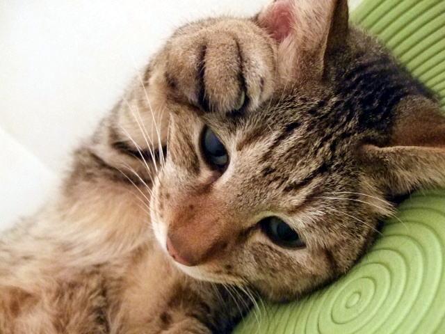 猫の威嚇の原因⑤:環境の変化を感じた時