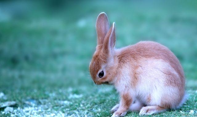 冬の寒さに要注意!冬のウサギの正しい飼い方と寒さ対策を徹底解説!
