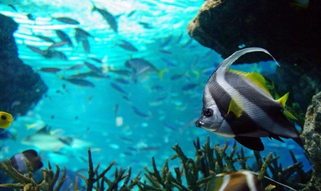 熱帯魚のエサの量と回数はどれくらいがいい?おすすめの餌やりの方法はコレ!