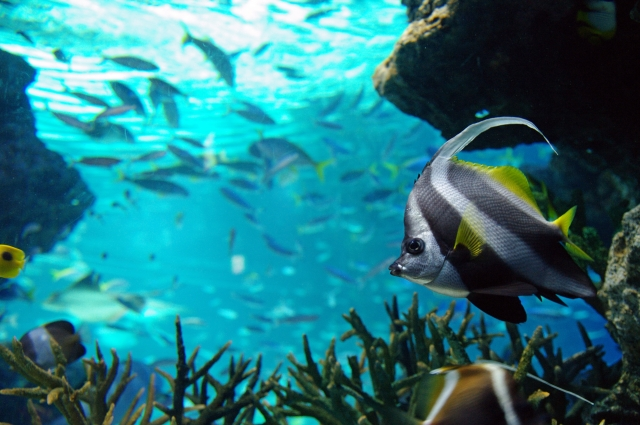 熱帯魚は水草を食べている?