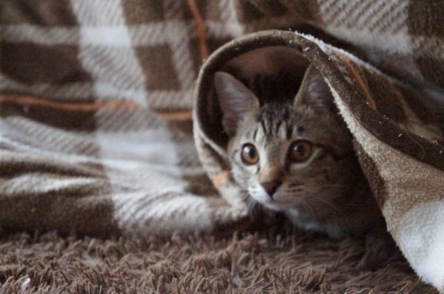 猫の威嚇の原因①:恐怖を感じている