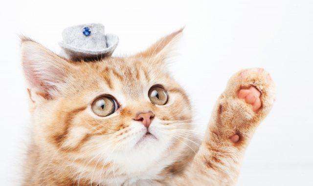 ウチの猫、甘えん坊すぎる!もしかしたら分離不安症かも?対策や解決方法は?