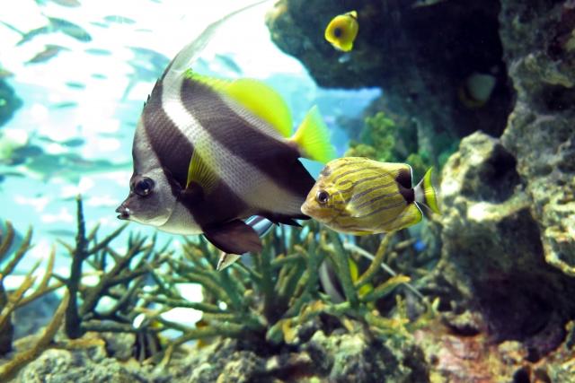 熱帯魚を飼育する場合の維持費